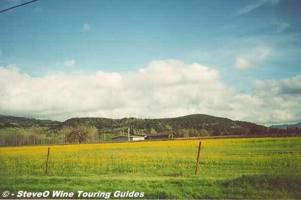 Napa Wine Page Picture